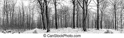 vinter, sceneri, i, en, skov, hos, sne, ind, panorama