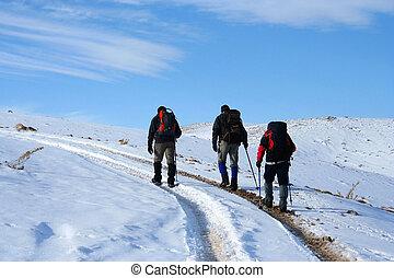 vinter, skönhet, snö, och, trekking