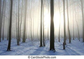 vinter, skog, in, den, solsken