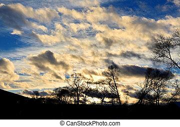 vinter, skymning, solnedgång, över, skog