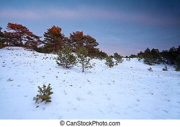 vinter, solnedgång, över, snöig, skog