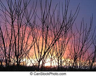vinter, solnedgang, igennem, den, træer