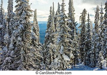 vinter, terräng, snö, lavin, höjande, benäget
