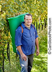 Vintner in the wineyard - Vintner wearing butt full of...