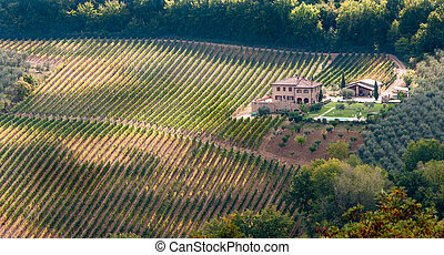Vinyart, Tuscany, Italy - Rows of pruned bare grape vines in...