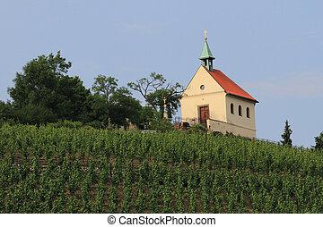 vinyeard in the Prague