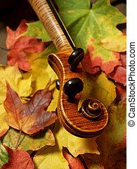 violín, árbol, arce