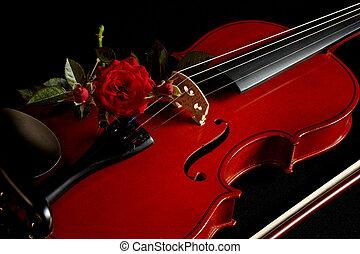 violín, rosa roja