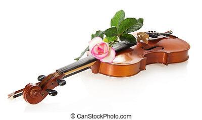 violín, y, apacible, rozy