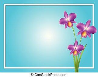 viola, bordo, sagoma, orchidea