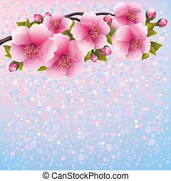 viola, ciliegia, -, giapponese, albero, fiore, sakura, fondo