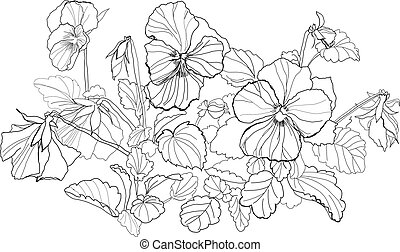 viola flowers drawing on white background