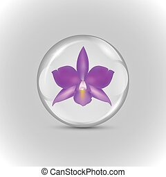 viola, palla, orchidea