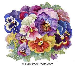 Viola Tricolor: watercolor flower, bouquet flower, illustration
