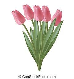 viola, vettore, tulips, illustrazione
