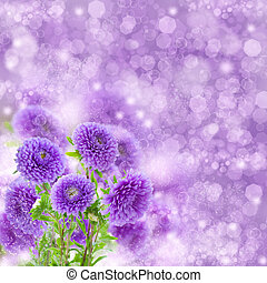 violet aster flowers on bokeh background - bouquet of fresh ...