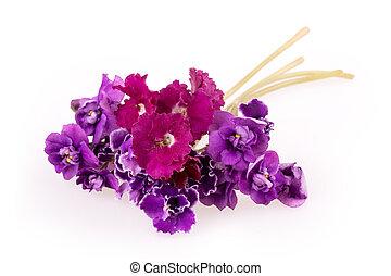violet bloem