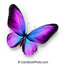 Violet blue butterfly , isolated on white