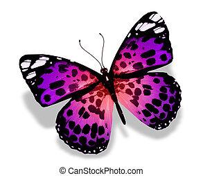 Violet butterfly