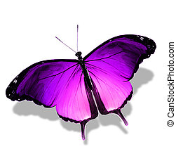 Violet butterfly