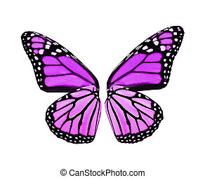 Violet butterfly wings , isolated on white