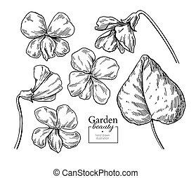 Violet flower drawing. Vector hand drawn engraved floral set. Viola black ink sketch. Wild botanical garden bloom. Great for tea packaging, label, icon, greeting cards, decor