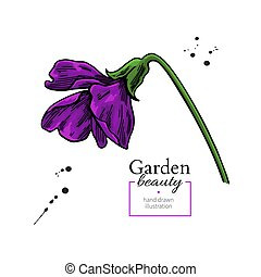 Violet flower drawing. Vector hand drawn floral object. ...
