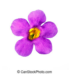 violet flower head on a white background