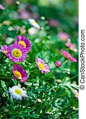 Violet flower in garden with nature light