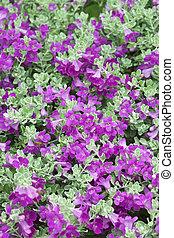 Violet flower on tropical garden