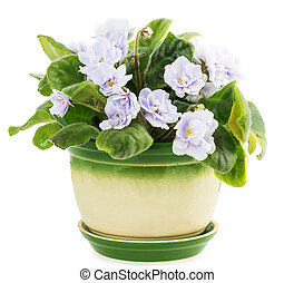 violet flower pot isolated on white background