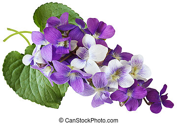 Violet Flowers - Bundle of blue, white, and purple wild...
