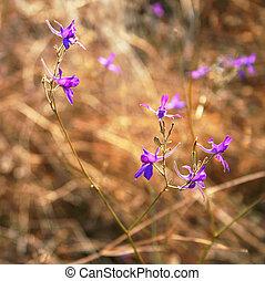Violet flowers in a field