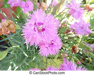 Violet Flowers in a Garden
