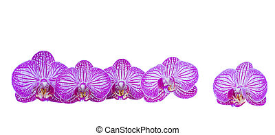flowers of orchid border
