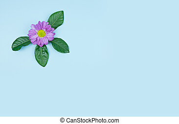 Violet flowers with copy space on blue background