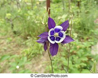 Violet Garden Flower