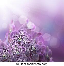 violet, orchidées