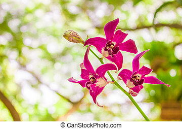 Violet orchid flower on leaves background in garden