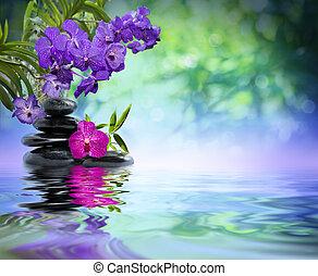 violet orchids, black stones