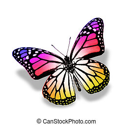 Violet pink butterfly , isolated on white - Color butterfly...