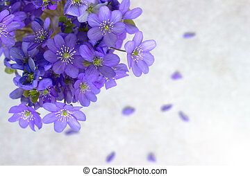 Violet Spring flowers background in the sunlight morning