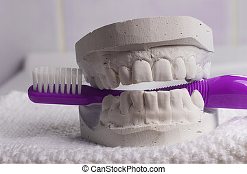Violet toothbrush with dental gypsum