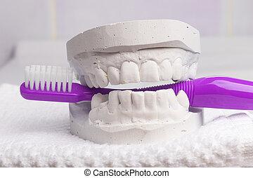 Violet toothbrush with dental gypsum