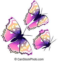 violeta, bonito, isolado, branca, borboletas