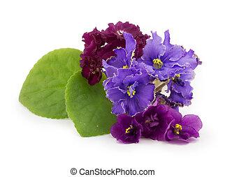 violeta, flor