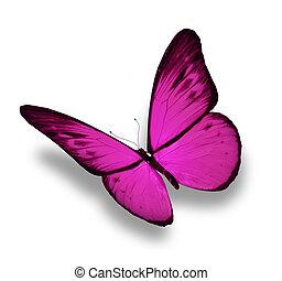 violeta, mariposa, aislado, blanco