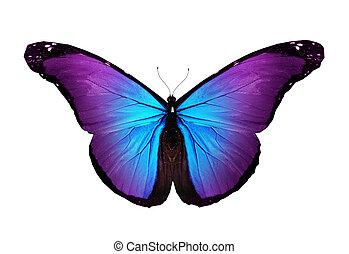 violeta, mariposa, vuelo, aislado, blanco
