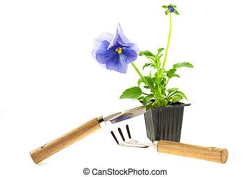 violeta, pansy\'s, broto, em, plástico, caixa, e, ferramentas ajardinando