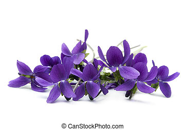 Bunch of violets, over white background.